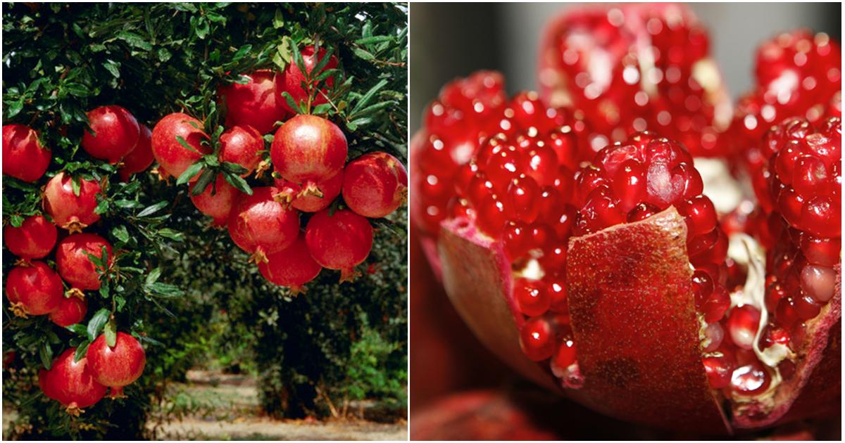 Combinație miraculoasă pentru sănătate plină de vitamine și nutrienți. Iată ce au demonstrat specialiștii despre beneficiile rodiei