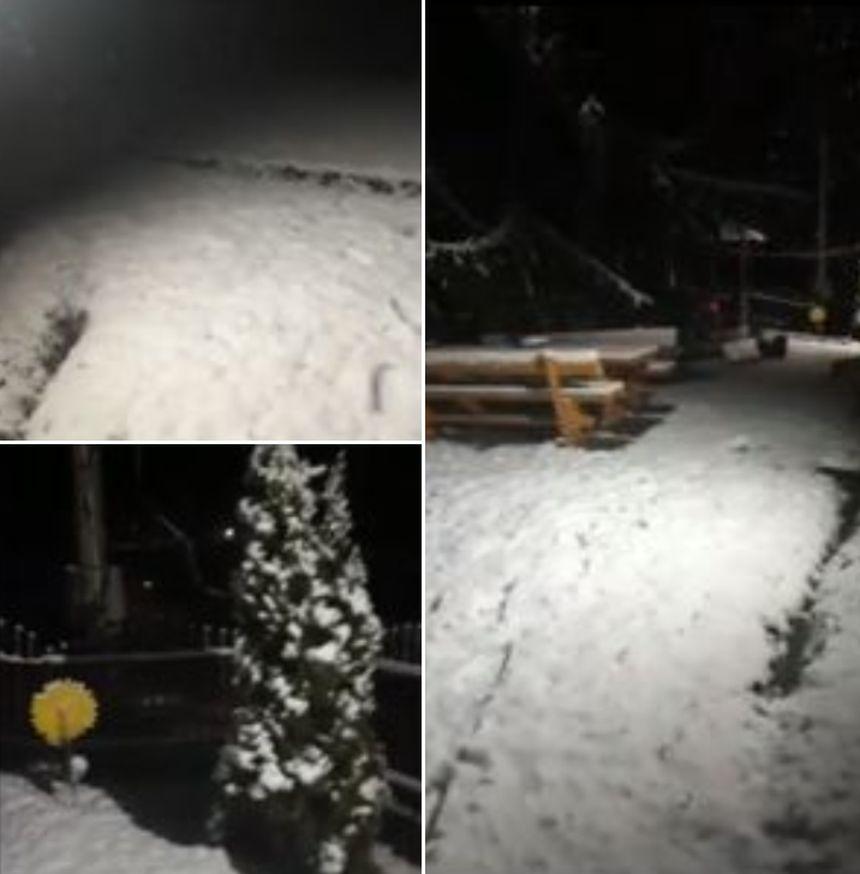 Ninge in Romania! VIDEO în timp real: