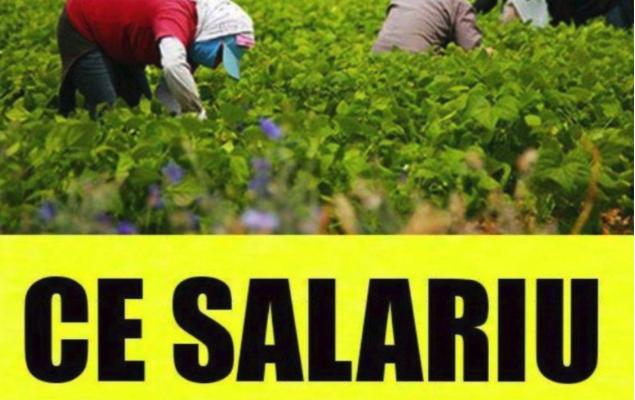 Fermele din Germania care angajeaza romani la cules de sparanghel! Salariu pe ora sau kilogram