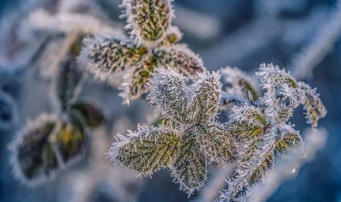Sfaturi pentru întreținerea grădinii pe timp de iarnă